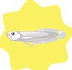 Silver Arowana