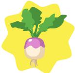 HG-Turnip