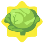 Below average homegrown cabbage