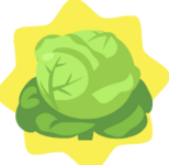 HG-Cabbage