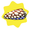 Cypraea Englerti