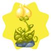 Tinkerbell flower