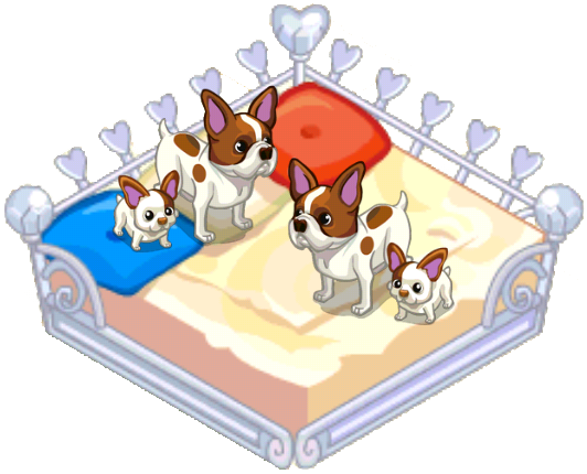 File:French bullhuahua.png