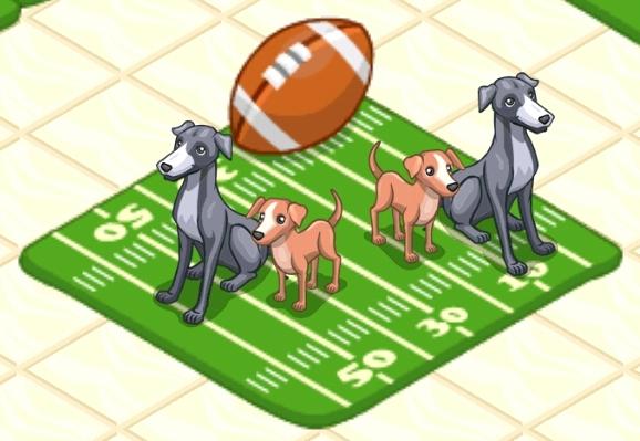 File:Greyhound.jpg