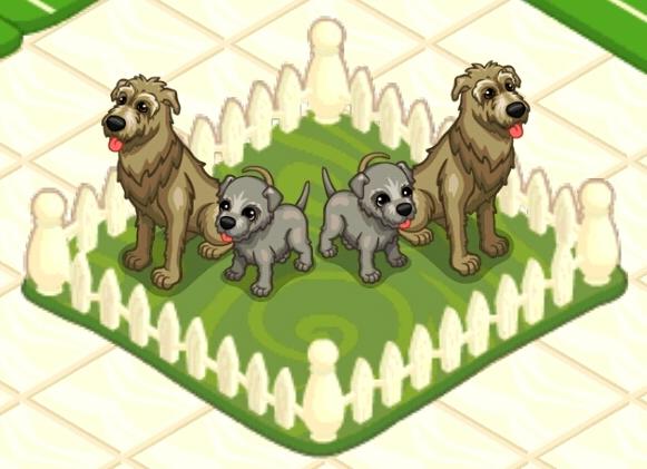File:Irish wolfhound.jpg
