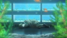 Pet 6 - Hiroki awaiting a call