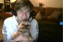 Ynk, the smiling yorkie