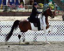 National Show Horse1-1-