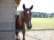 1024px-Muso di cavallo (Horse Head) 2-1-