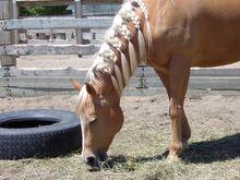 Horse-869618 960 720-1-