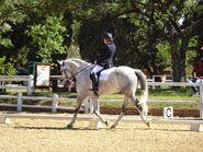 Horse-2665751 960 720