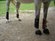 1024px-Protection jumping eventing-1-