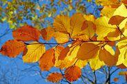 Foliage-539413 960 720-1-