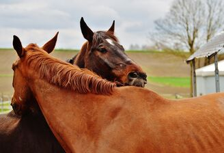 Horses-1335017 960 720