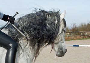 Horse-2116907 960 720-1-