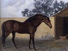 Godolphin Arabian-1-