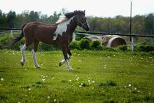 Colorful-horse-2388277 960 720-1-
