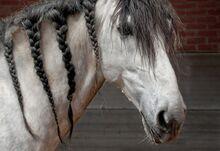 Horse-2049971 960 720-1-