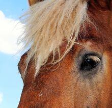 Horse-385745 960 720-1-