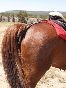 800px-Saddle-crupper-1-
