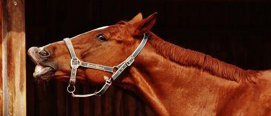 Horse-1704624 960 720-1-