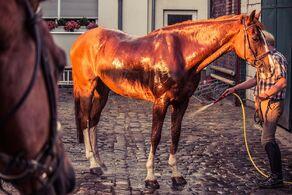 Horse-1566824 960 720-1-