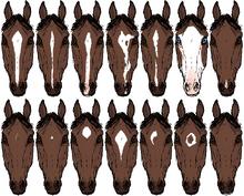 Horsemarkings-1-