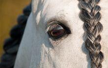 Horse-2097661 960 720-1-