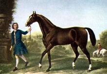 Darley Arabian-1-