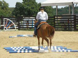 Horse-444021 960 720-1-