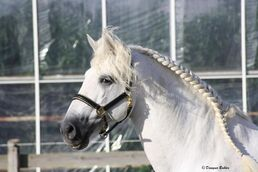 1024px-Andalusian 2-1-
