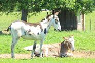 Donkey-1001906 960 720-1-