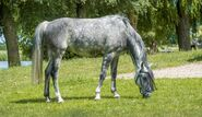 Horse-2377457 960 720-1-