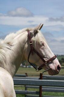 Horse-1124261 960 720-1-