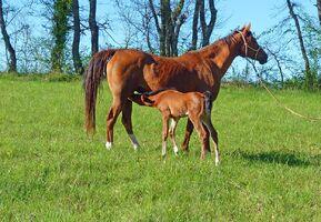Horse-1987506 960 720-1-