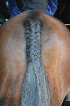 Horse-684792 960 720-1-