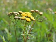Flower-1670140 960 720-1-