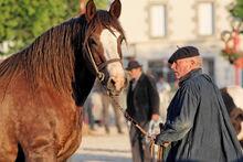 Horse trait breton 5622-1-