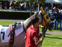 Horse-racing-784724 960 720-1-