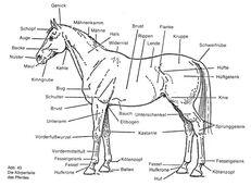 Pferdteil-1-