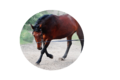The-horse-2460069 960 720.png