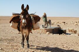 Donkey-534906 960 720-1-