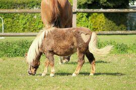 Horse-2257460 960 720-1-