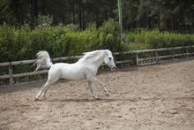 Horse-2642142 960 720-1-