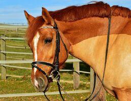 Horse-2814260 960 720-1-