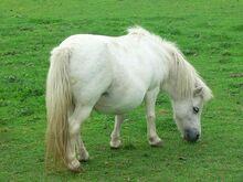 Pony-2009 960 720-1-