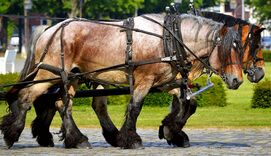 Work-horses-2383623 960 720-1-