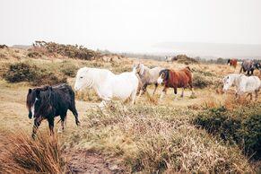 Horses-1149922 960 720-1-