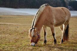 Horse-1946869 960 720-1-