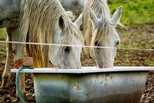 Horse-1199215 960 720-1-